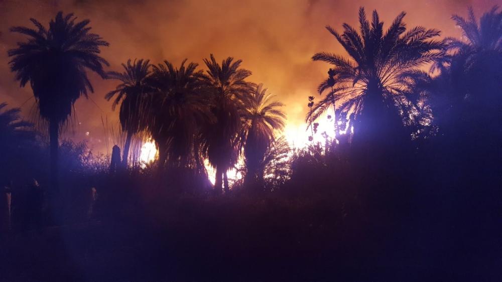 مدني ضباء يكافح حريقًا شبّ في أشجار ونخيل بالديسة