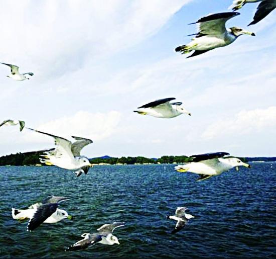 أم القماري الملاذ الآمن للطيور المهاجرة المدينة